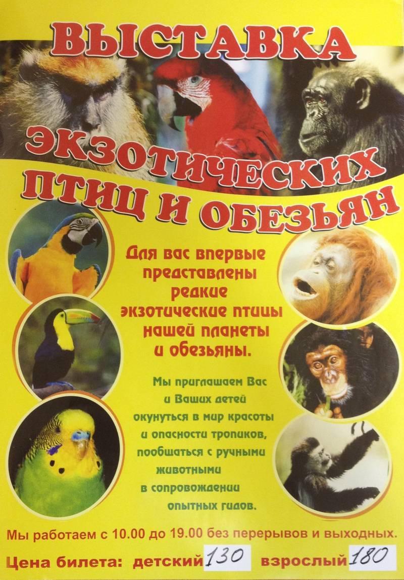 C 7 октября по 2 ноября тропический зоопарк в Радуге